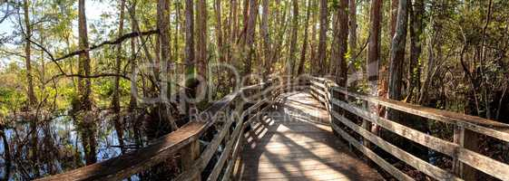 Boardwalk path at Corkscrew Swamp Sanctuary in Naples