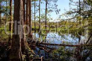 Wetlands in the Corkscrew Swamp Sanctuary