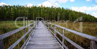 Boardwalk path at Corkscrew Swamp Sanctuary in Naples, Florida