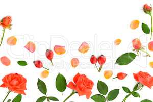 Pink roses isolated on white background. Flat lay, top view.