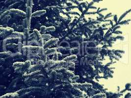 Winter background with fir tree