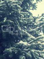 Winter background with fir tree and snow