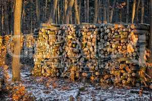 Woodpile in the frorest in wintertime