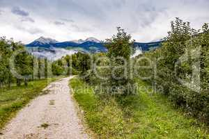 Apple orchard in South Tyrol
