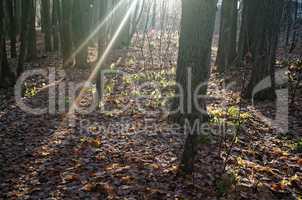 sunlight through the trees in the autumn