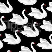 White birds seamless pattern. Wildlife background. Swimming swan