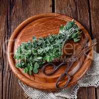 Aromatische Oregano (Origanum vulgare)