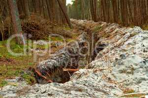 the trench in the pine forest, the groove for laying cable in the forest, the destruction of the environment