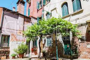 Cozy courtyard with old grape tree in Venice