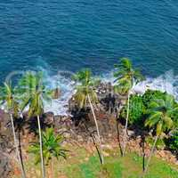 Beach tropical ocean with coral, palm trees and lagoon. Top view