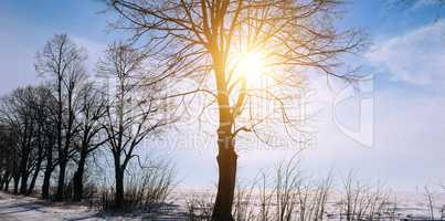 Winter landscape. Sunrise . Fields and trees in the snow. Wide p