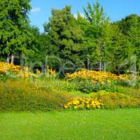 Summer park with beautiful flower beds.