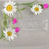 Flowers composition.The frame is made of flowers of chamomiles a
