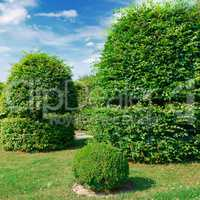Hedges and ornamental shrub in a summer park.