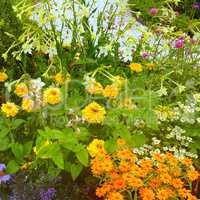 Lush flower beds in the summer garden.