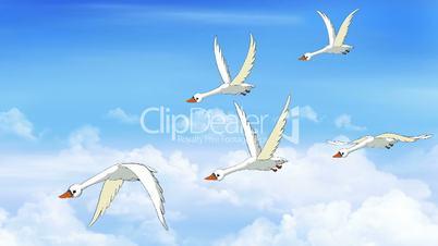 Flock of Swans Flies in the Sky
