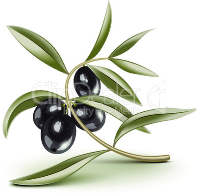 Transparent editable Black olives branch