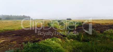 Foggy field landscape