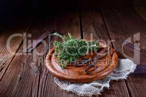 Thymian (Thymus vulgaris).