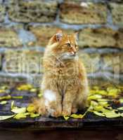 a red cat sitting on a wooden surface among yellow leaves