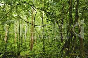 Landscape of tropical rainforest
