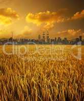 Kuala Lumpur city skyline and paddy field