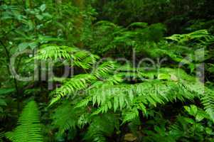 Plants in tropical forest.