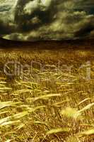 Storm in the harvest field