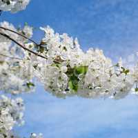 Spring flowers. Beautifully blossoming tree branch. Welcome spri