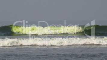 Polluted Algae Beach
