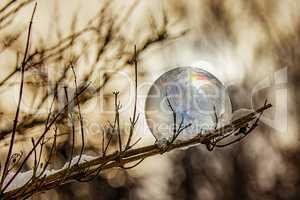 Frozen soap bubble in the branch