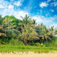 Tropical palms on the sandy beach .