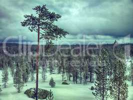 Snow-covered taiga of Lapland. After recent snowfall
