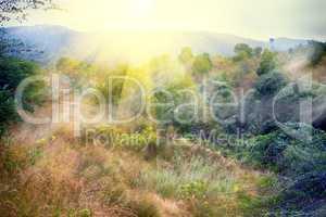 bush of Deccan plateau (India).