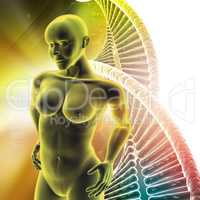 Human female anatomy with DNA