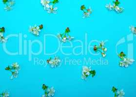 blue background with blooming white flowers and green stems of c