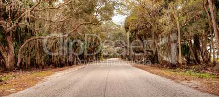 Moss covered trees line a road along the wetland and marsh at th