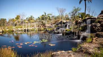 Pond with water lilies and a waterfall