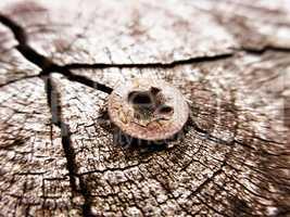 Rusty Screw.