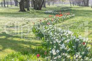 Flowerbed in spring
