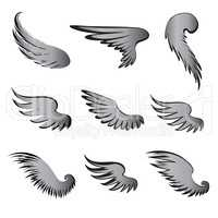 Wings Vector Set. Bird detail