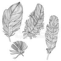 Feather sign isolated set. Different birds doodle feathers