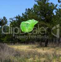 empty green garbage bag flies against the background of green pi