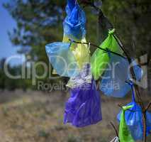 many multicolored plastic bags hanging on a pine branch