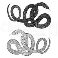 Snake set. Engraved wildlife reptile silhouette. Patterned animal tail