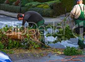Forestry worker sawing a tree trunk with a chainsaw