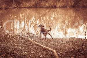 sweat hound stand at a lake