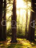 Mystical forest with sunbeams
