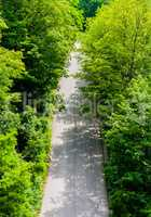 Empty unmarked asphalt path in dense foliage.