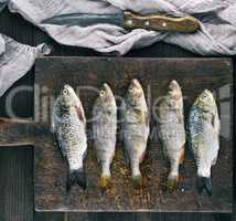 river fish crucian and perch